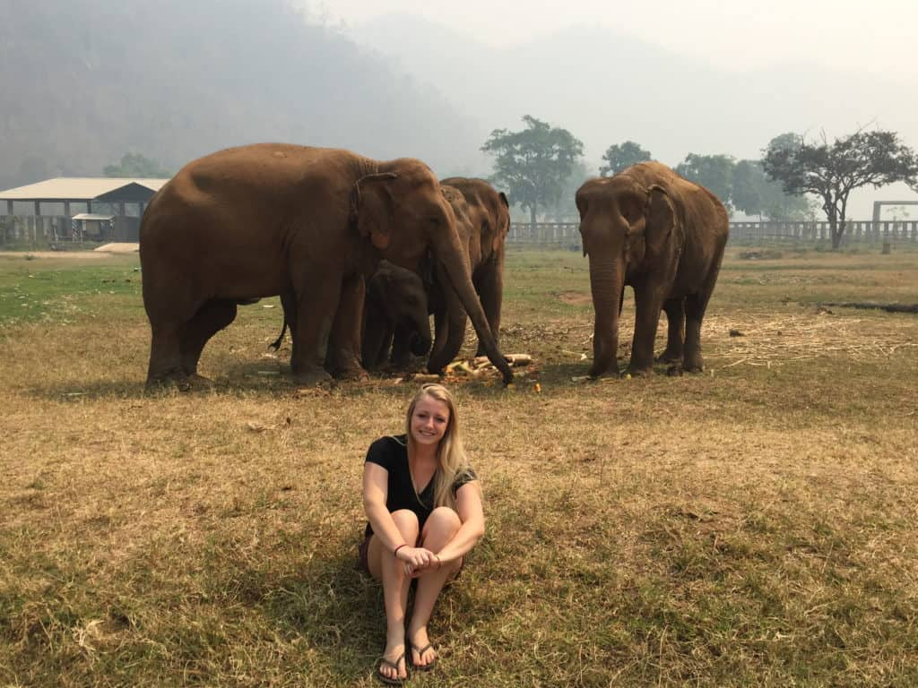 Don't Ride the Elephants while visiting Thailand