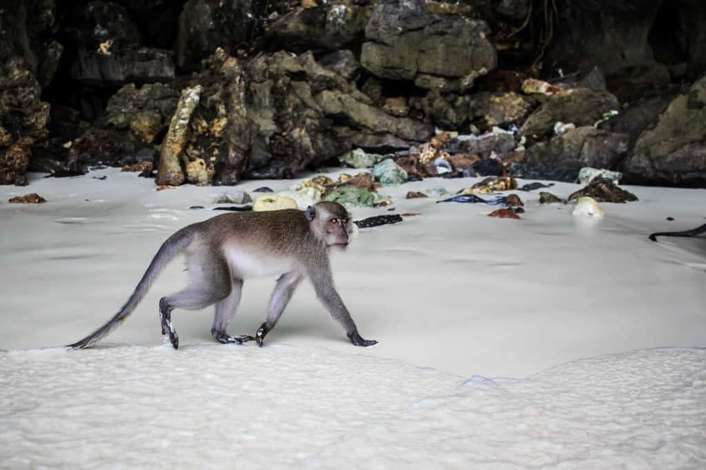 Things to Do in Ko Phi Phi Island