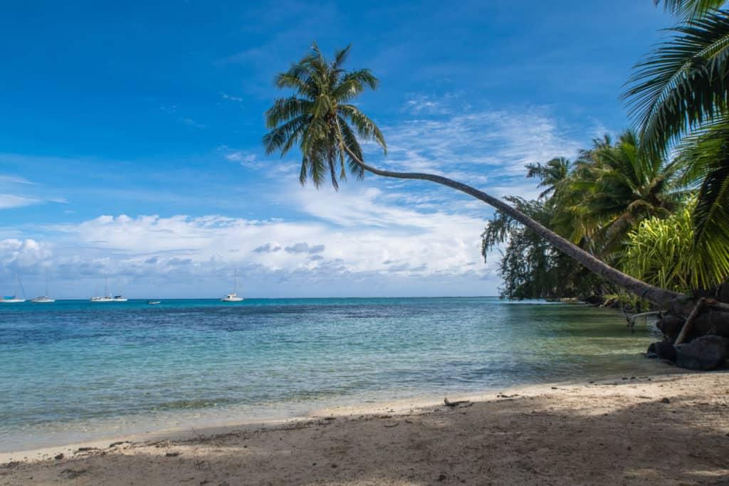 A tall palm tree extending out over the ocean at Ta'ahiamanu Beach
