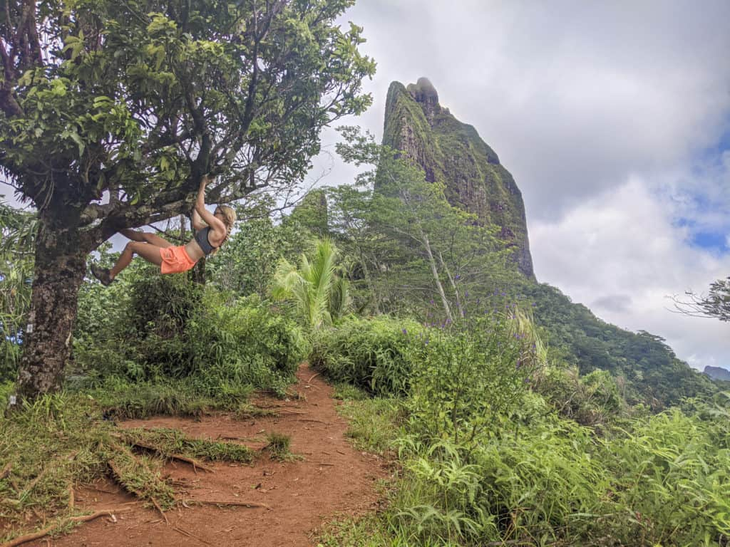 Climbing a tree at the top of three coconut tree pass on the island of Moorea