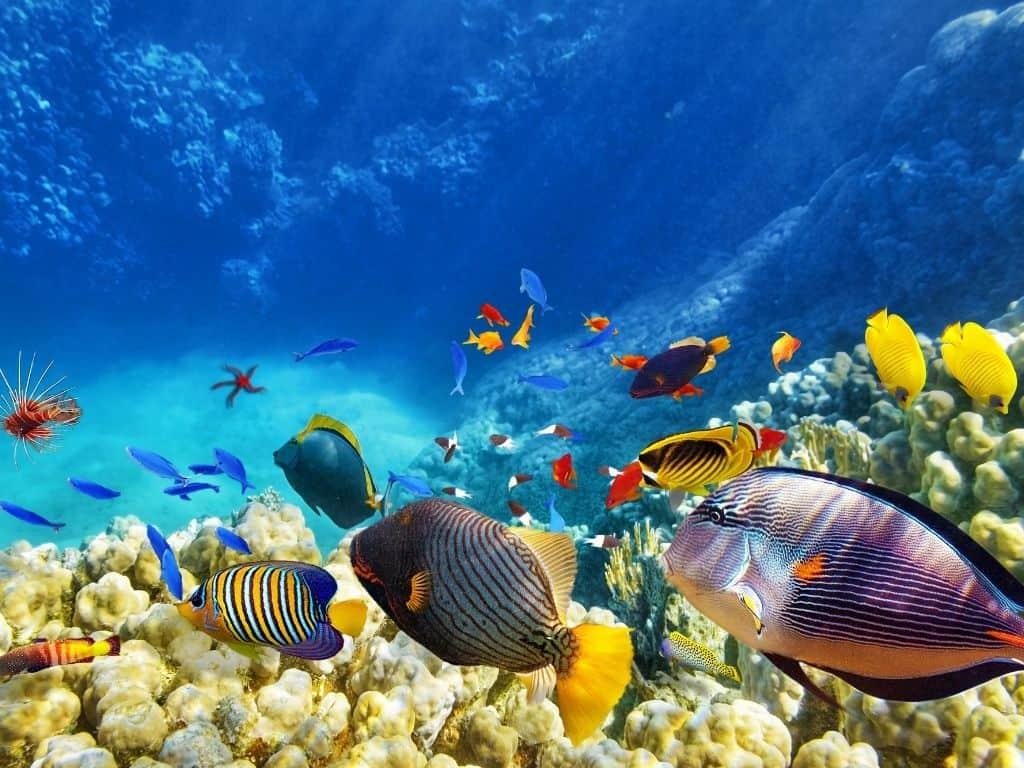 Colorful fish at the aquarium in Boise.