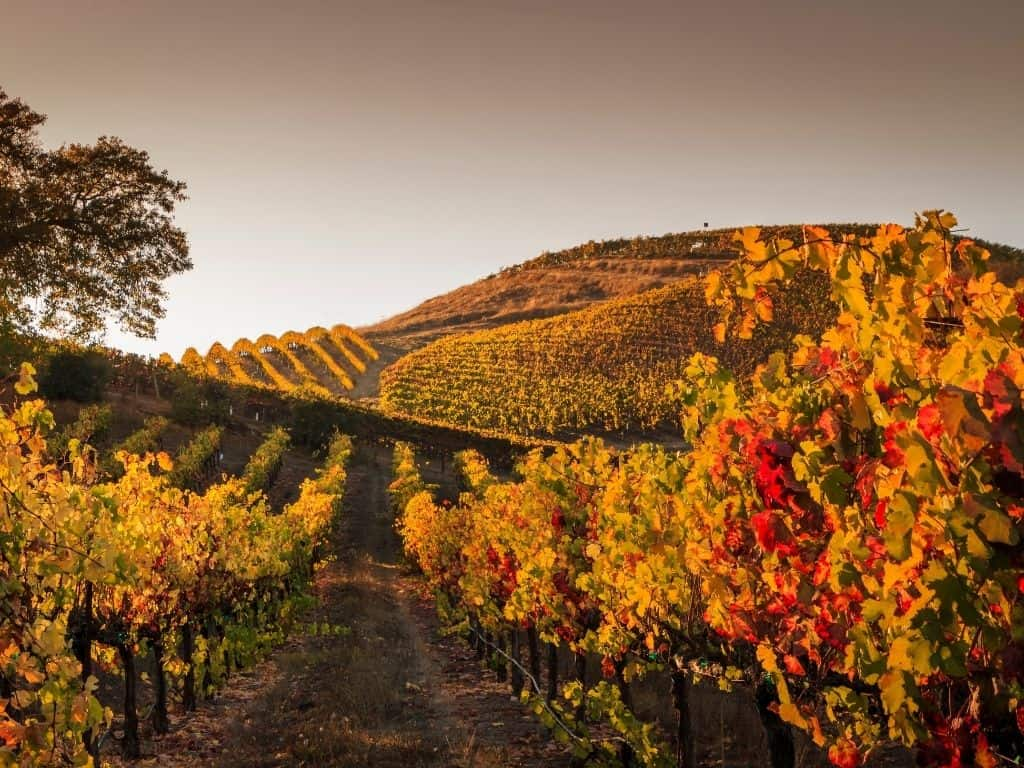 A vineyard located along the foothills of Boise.