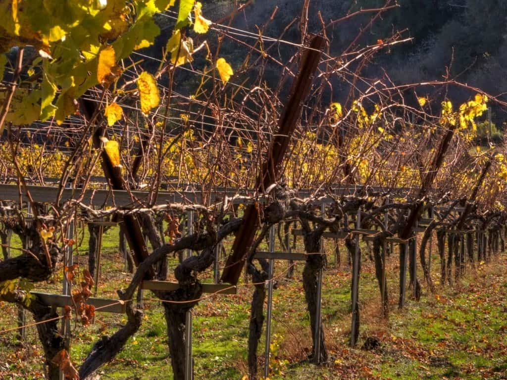 There are plenty of vineyards to visit near Boise, Idaho. A perfect adventure to add to your itinerary.