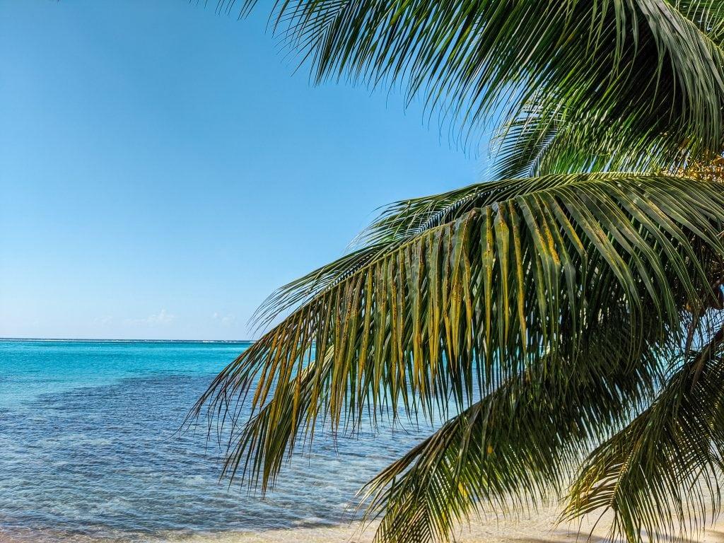 A Polynesian Palm Tree And Ocean