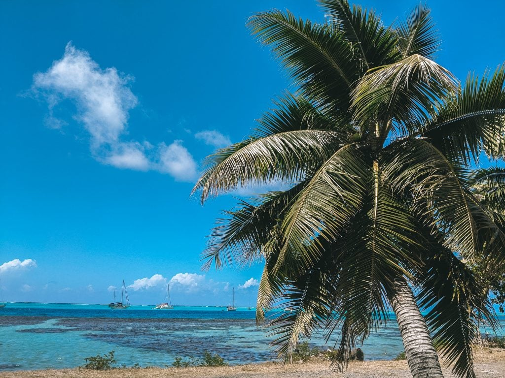 A Palm Tree On The Edge of The Coastline In Moorea, French Polynesia