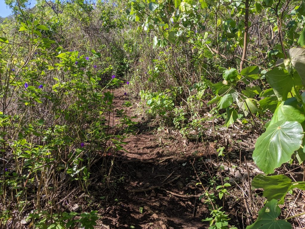 Trail Conditions For Rotui Hike In Moorea