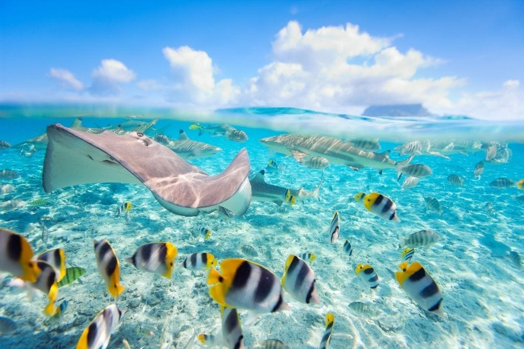 Tons of sea life at the Lagoonarium, one of the best beaches on the island of Moorea.