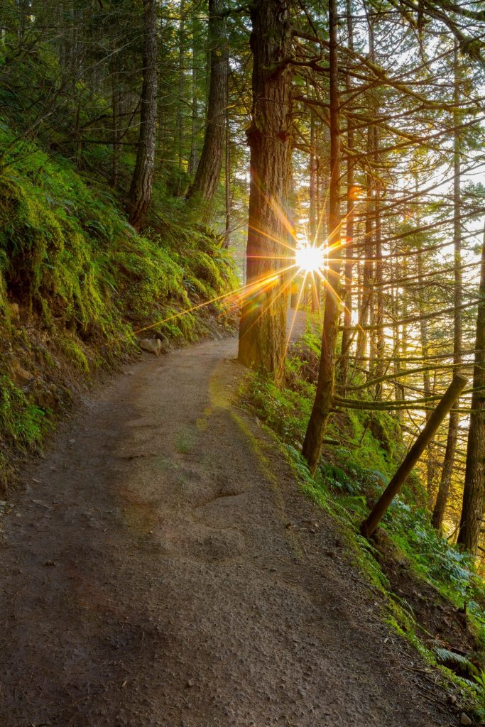 Soda Creek Trail With Sun Rising In Bend, Oregon.