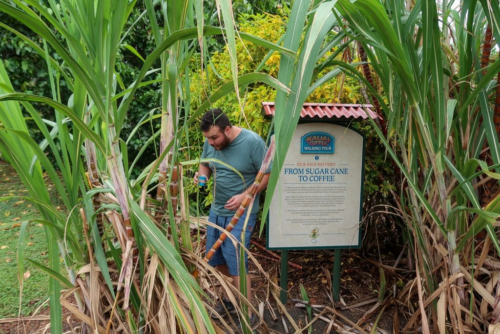 Visit A Coffee Plantation On The Island of Kauai.