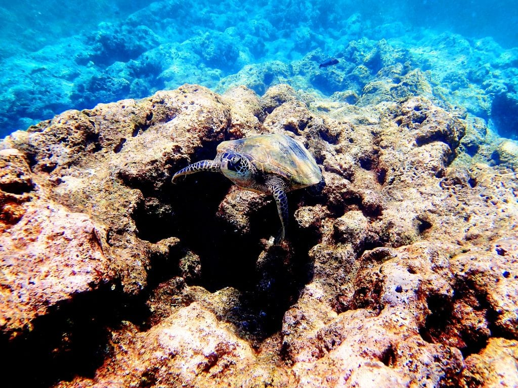 Snorkeling And Spotting Turtles.