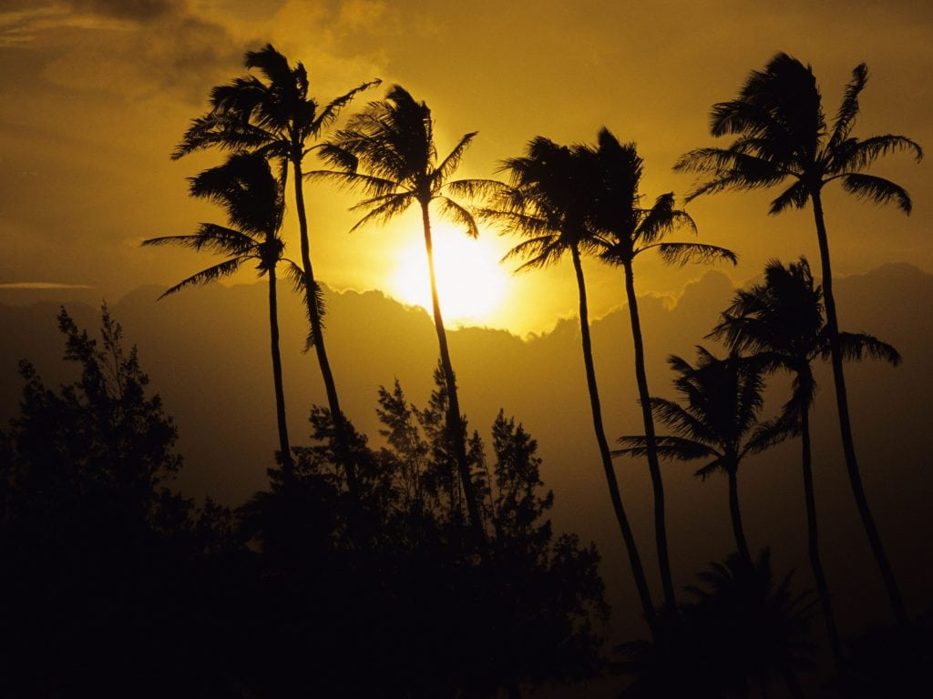 Sunset In Poipu, Kauai With Palm Trees. Check Out Poipu As One of the Best Places To Stay in Kauai.