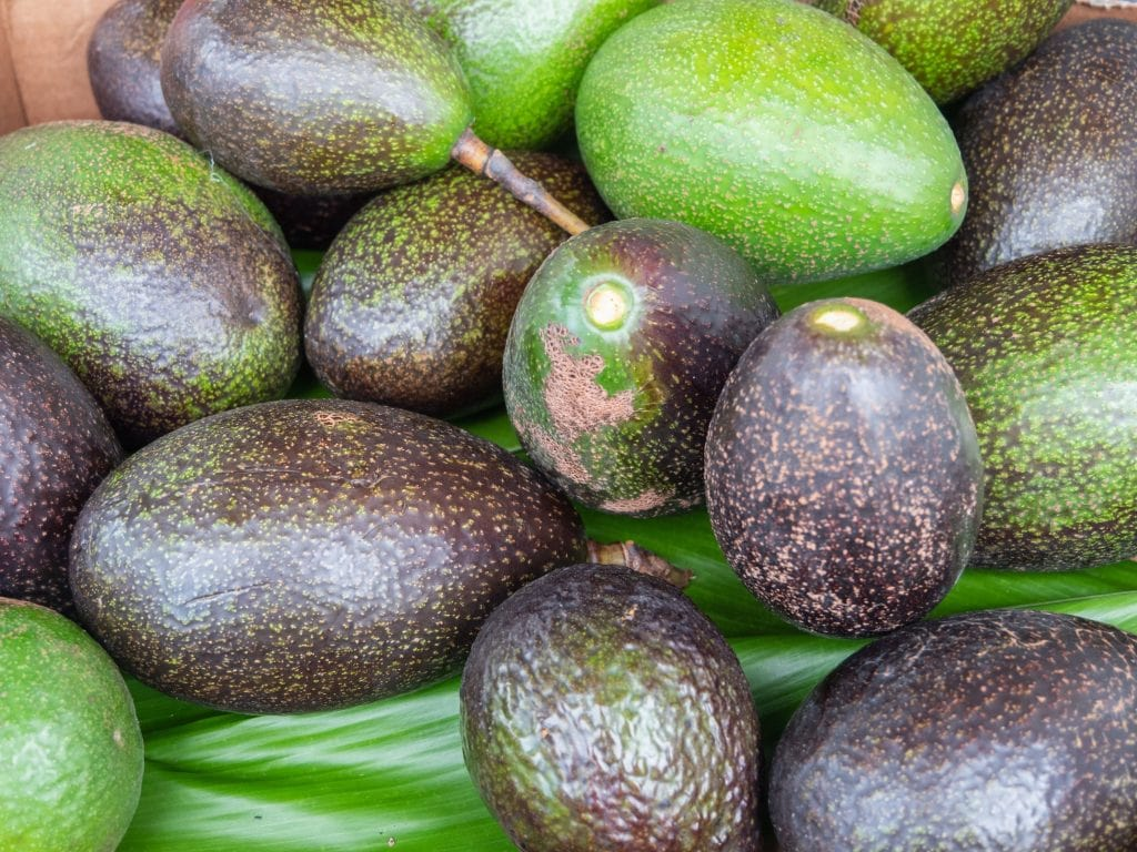 An Entire Frame Full of Avocados