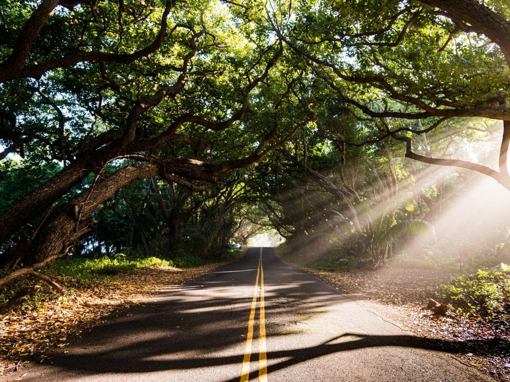 Kapoho Kalapana Scenic Drive Road Surrounded By Tropical Trees With Light Shining Through.