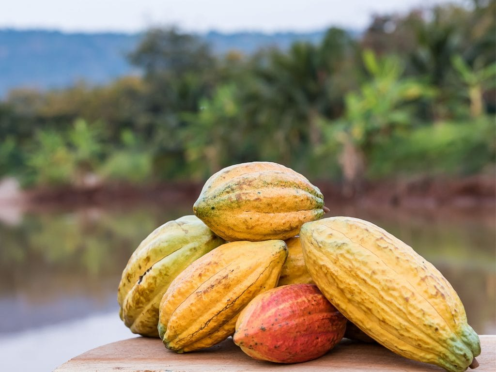Cacao Fruit Sitting On A Table.