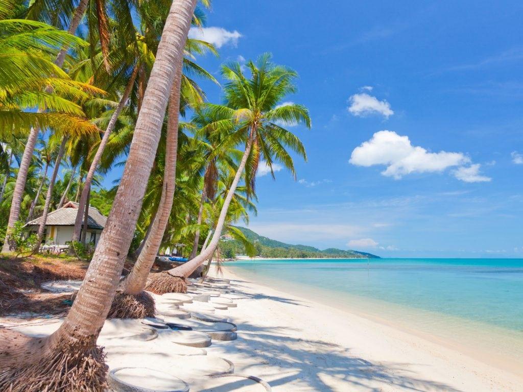 Palm Trees And White Sand Beaches on Koh Samui Thailand.