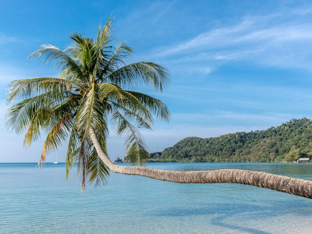Palm Tree Extending Out Over the Ocean In Koh Mak, Thailand.