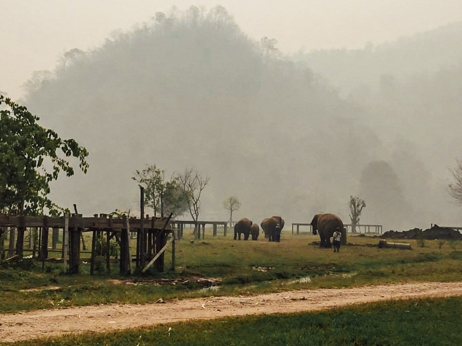 The Hills and Elephants In Northern Thailand.
