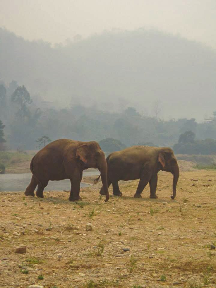 Elephant Nature Park in Chiang Mai.