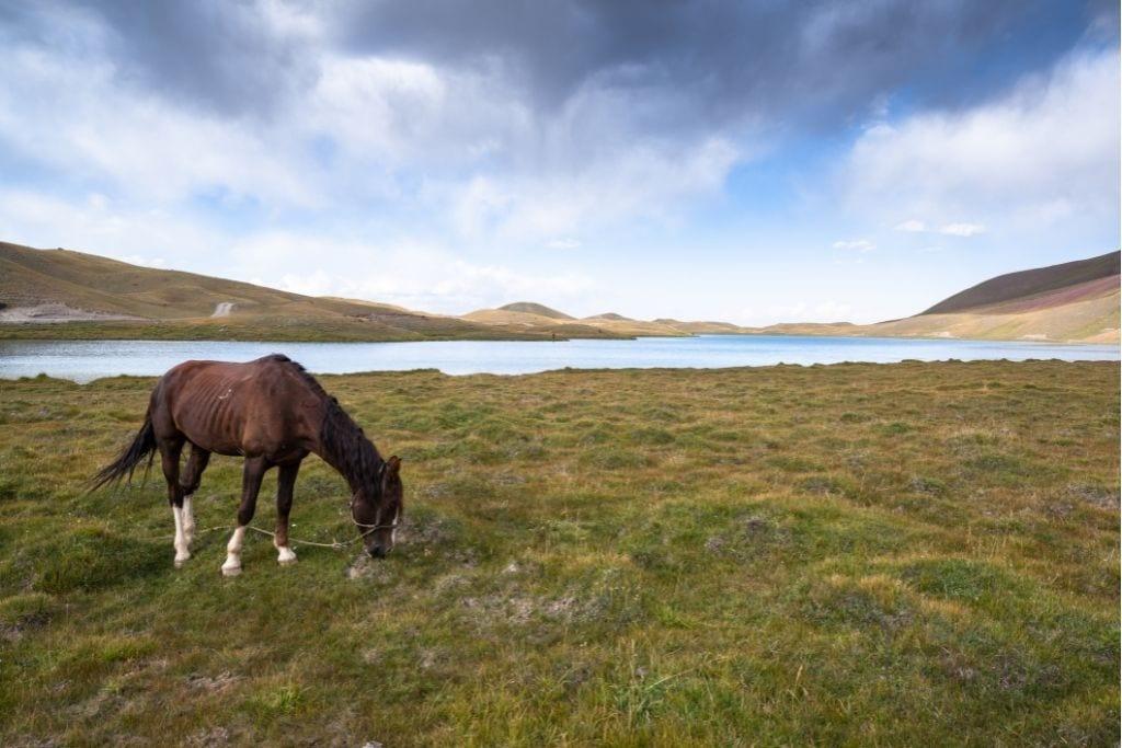 A Horse Grazing On The Plain Near Osh, Kyrgyzstan.
