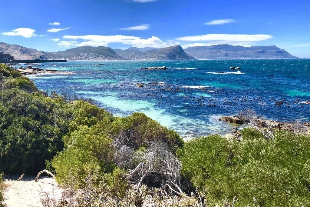 Boulders Beach in Cape Town, South Africa.