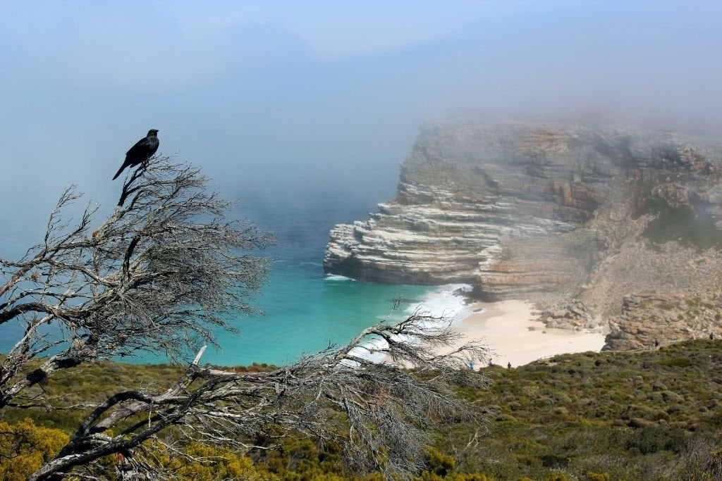 Diaz Beach Covered in Fog With A Black Bird Perched on a Tree in the Foreground.